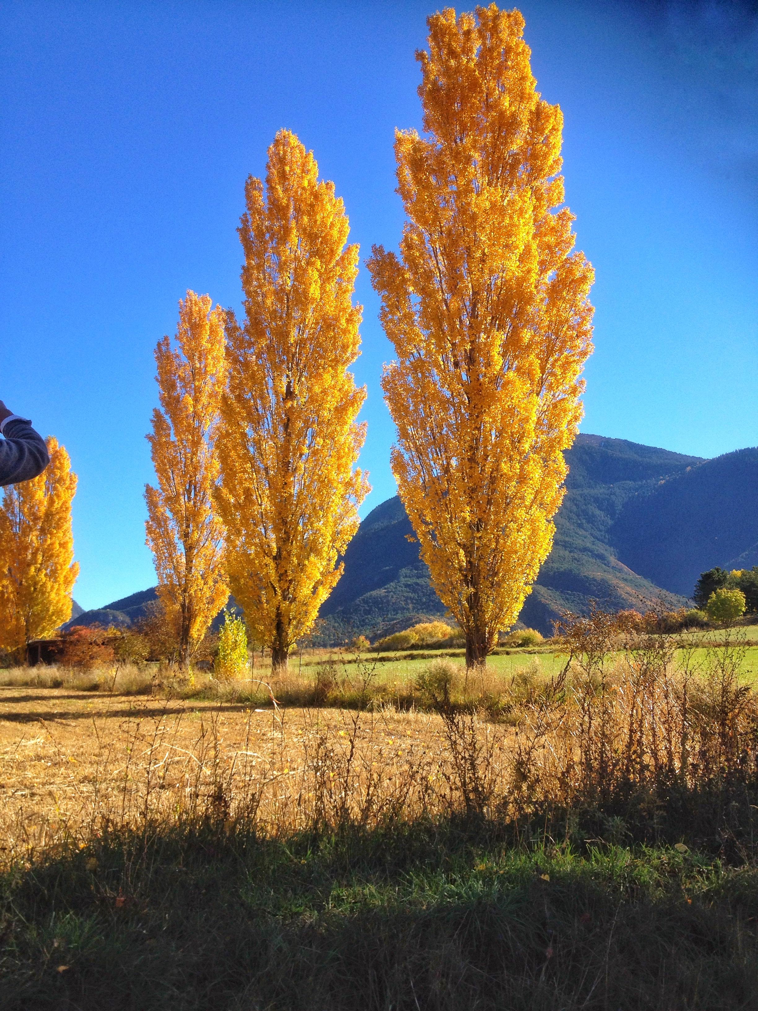 Couleurs d'automne sur le plateau de Guillestre