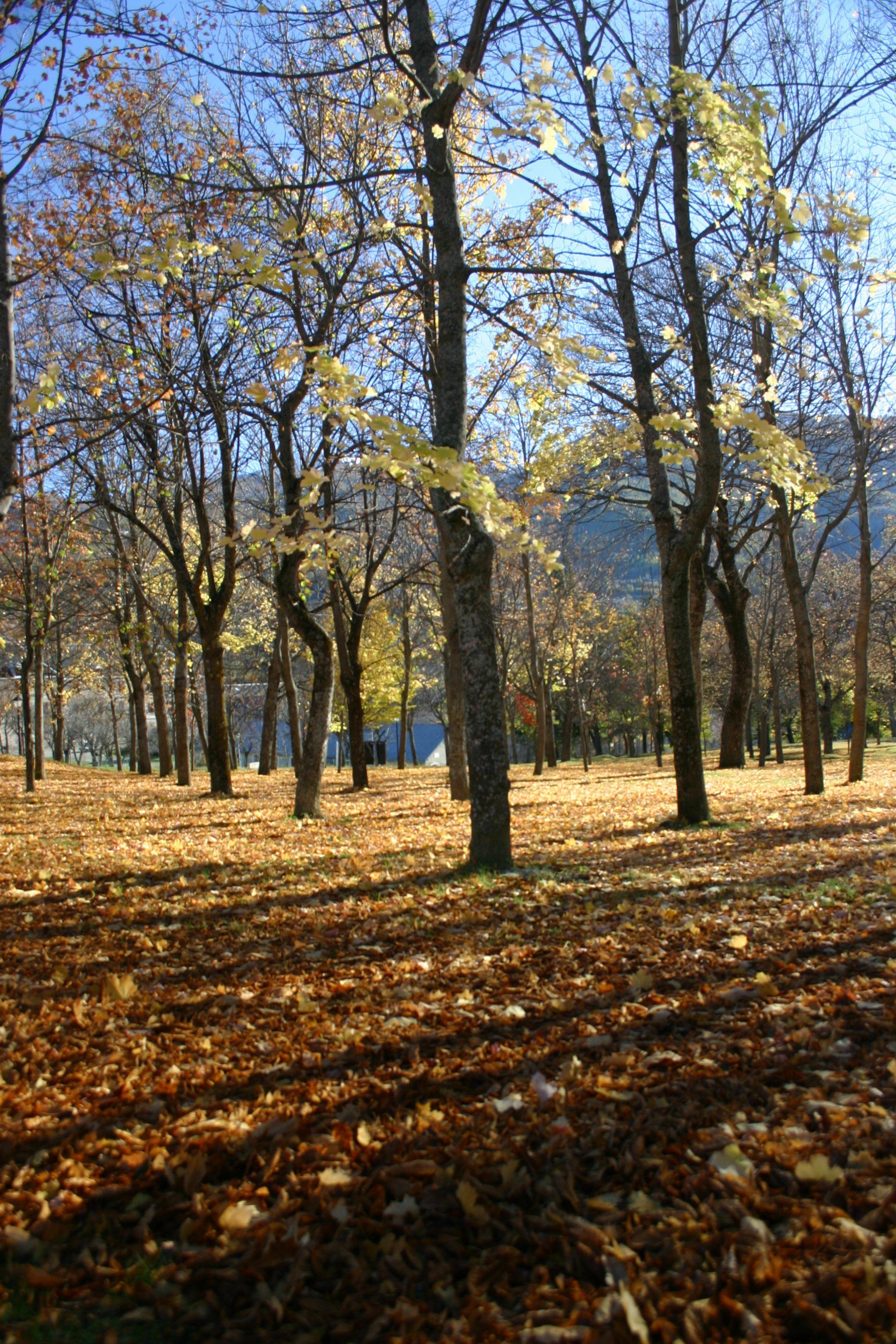 La plantation en automne