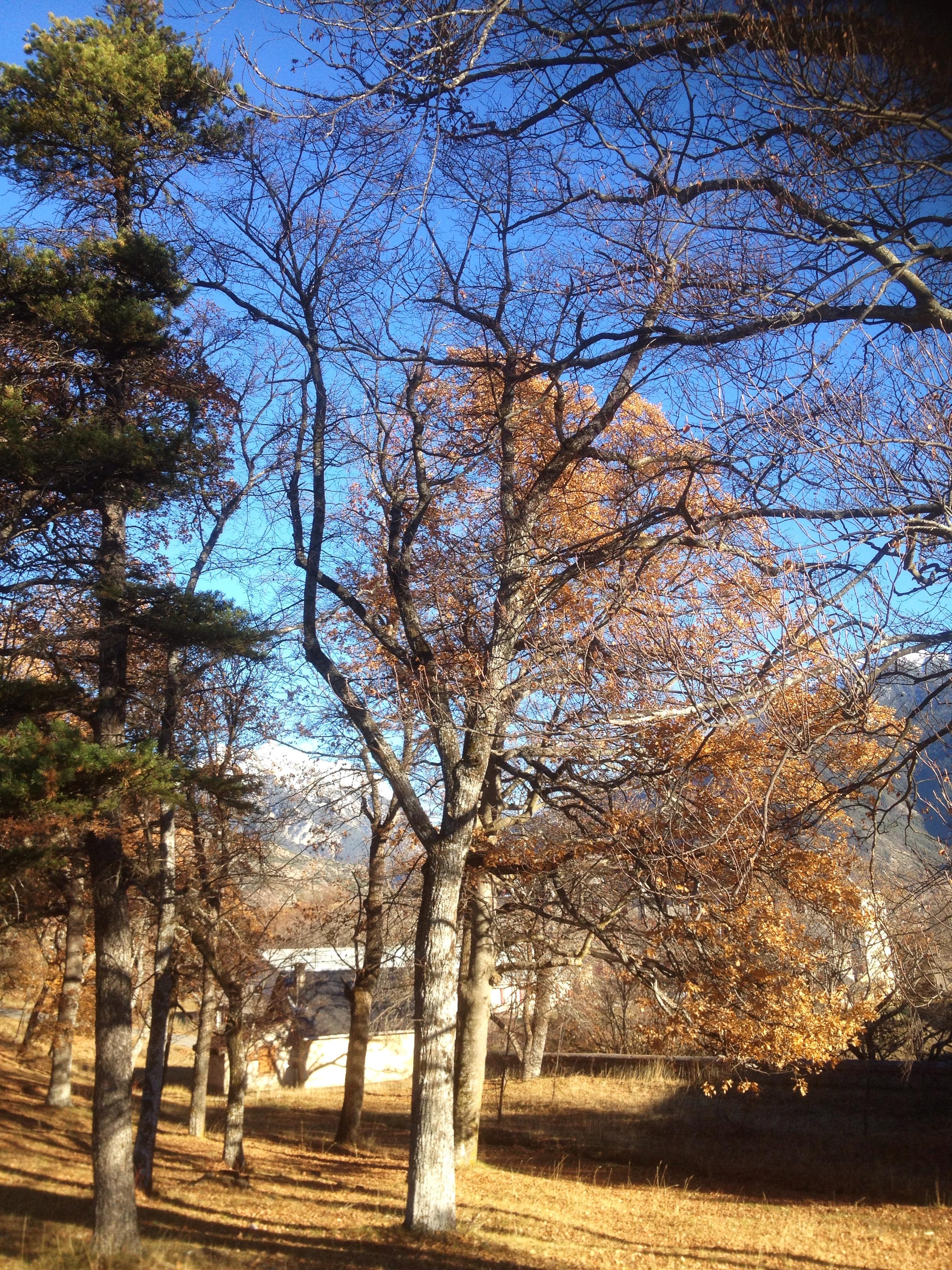 La plantation en fin d'automne