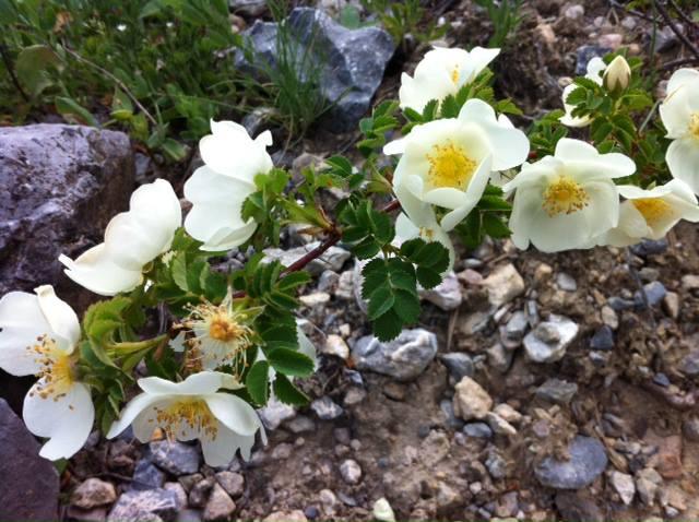 Printemps des Hautes Alpes, Un printemps des Hautes Alpes en images