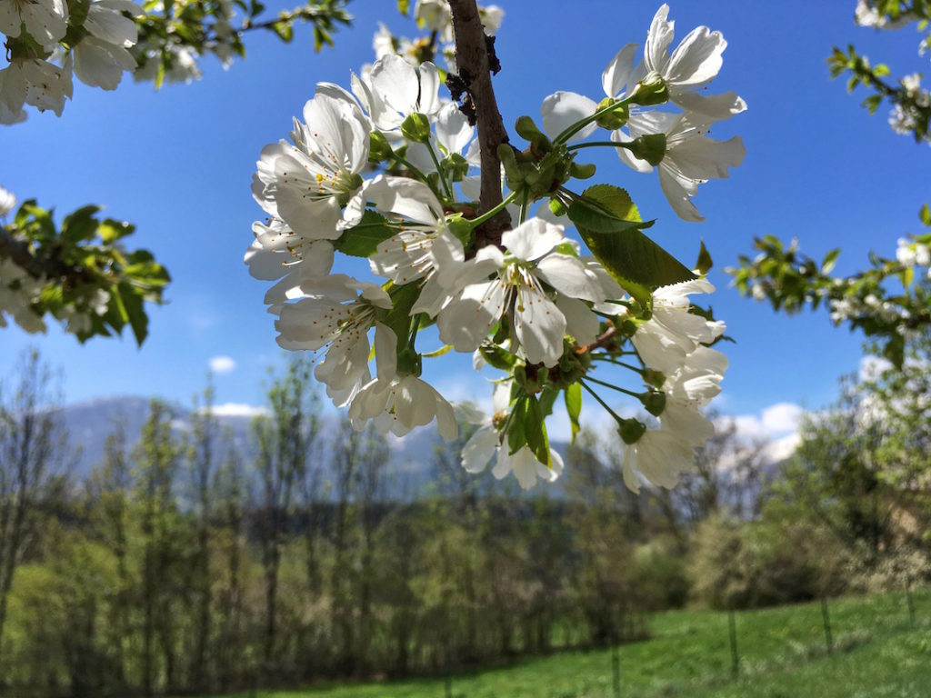 printemps, La beauté du printemps