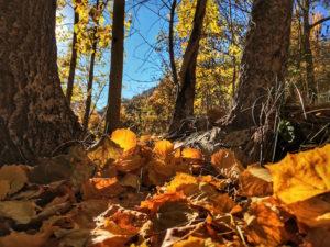 Couleurs d'automne dans la vallée de Freissinières